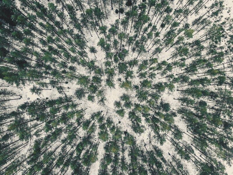 Powietrzna fotografia las w zimie - rocznika spojrzenie redaguje fotografia royalty free