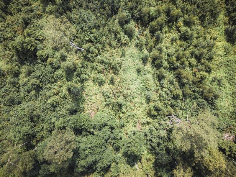 Powietrzna truteń fotografia wieś las, wierzchołka puszka widok w Pogodnym letnim dniu - tło materiał, rocznika spojrzenie Redagu obraz stock