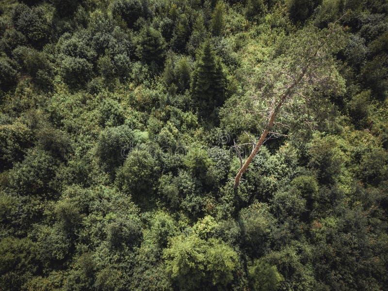 Powietrzna truteń fotografia wieś las, wierzchołka puszka widok w Pogodnym letnim dniu - tło materiał, rocznika spojrzenie Redagu zdjęcie stock