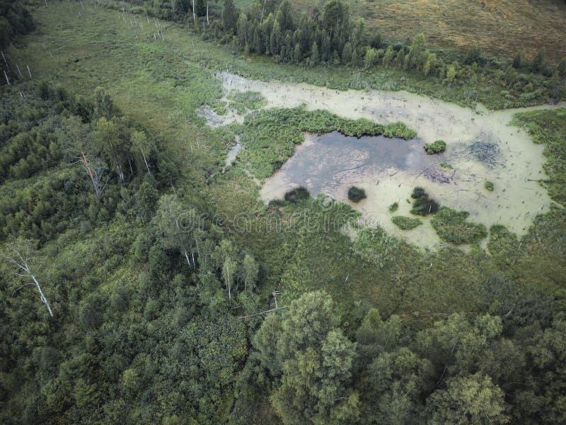 Powietrzna truteń fotografia wieś las, wierzchołka puszka widok w Pogodnym letnim dniu - tło materiał, rocznika spojrzenie Redagu fotografia stock