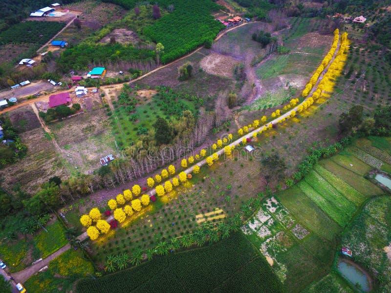 Powietrznej fotografii okwitnięcia jaskrawy żółty kwiat zdjęcia stock