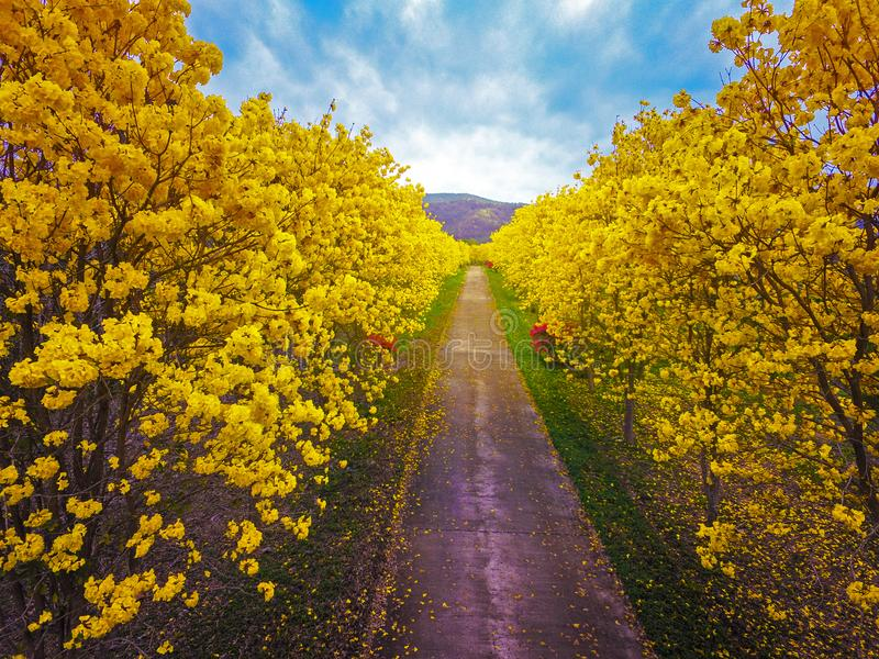 Powietrznej fotografii okwitnięcia jaskrawy żółty kwiat zdjęcie royalty free
