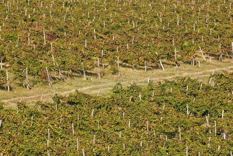 powietrzny Croatia istria widok winnica zdjęcie royalty free