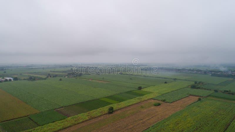 Powietrzny fotografii zieleni pole W ranek mgle zdjęcia stock