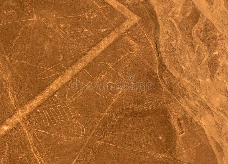Powietrzny samolotowy panoramiczny widok Nazca geoglyph wykłada aka wieloryba, Ica, Peru zdjęcia royalty free