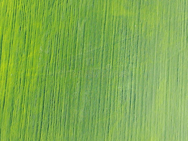 Powietrzny trutnia widok dalej na polu z kategoriami zieleni krótkopędy zdjęcie royalty free