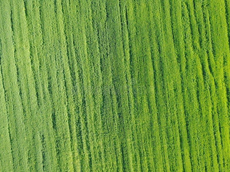 Powietrzny trutnia widok dalej na polu z kategoriami zieleni krótkopędy obraz stock