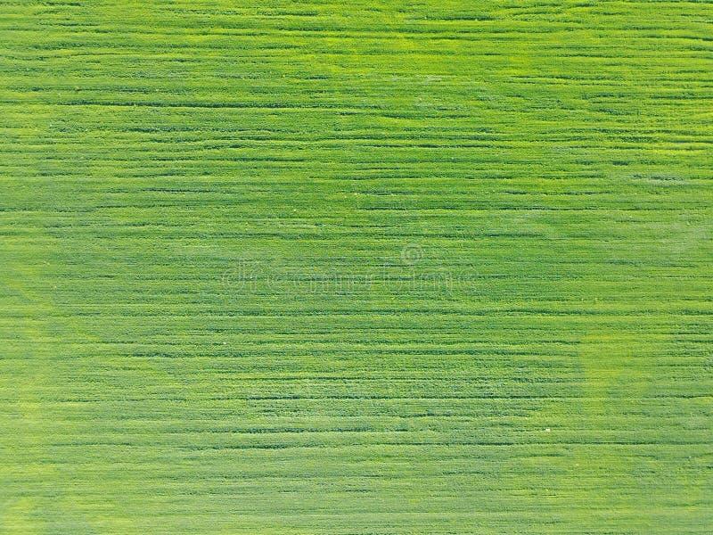 Powietrzny trutnia widok dalej na polu z kategoriami zieleni krótkopędy fotografia royalty free