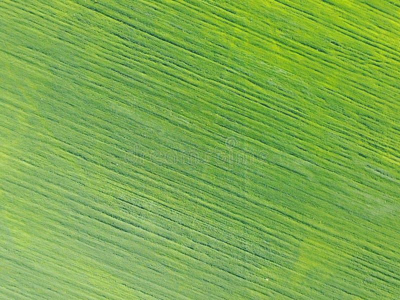 Powietrzny trutnia widok dalej na polu z kategoriami zieleni krótkopędy zdjęcie stock