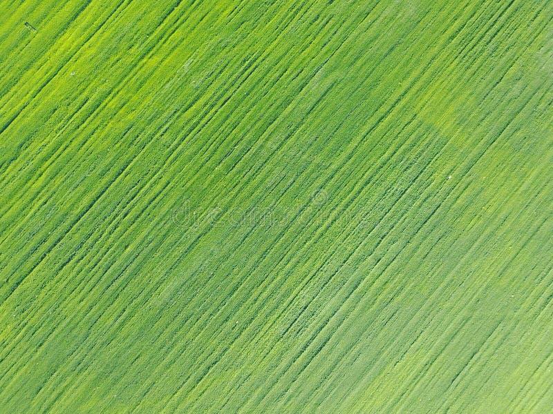 Powietrzny trutnia widok dalej na polu z kategoriami zieleni krótkopędy zdjęcia stock