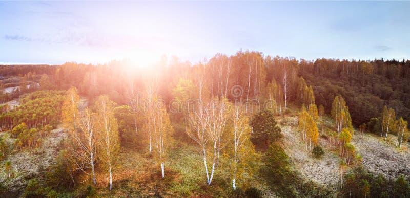 Powietrzny trutnia widok od above kukurydzany pole po żniwa, lasu i ziemi uprawnej w jesień zmierzchu, fotografia royalty free