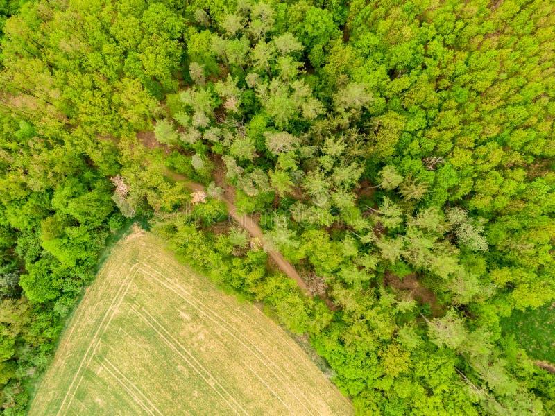Powietrzny trutnia widok pole, drzewa i las w rolnictwie, lądujemy Odgórny spojrzenie łąkowa pobliska wioska i gospodarstwo rolne obraz royalty free