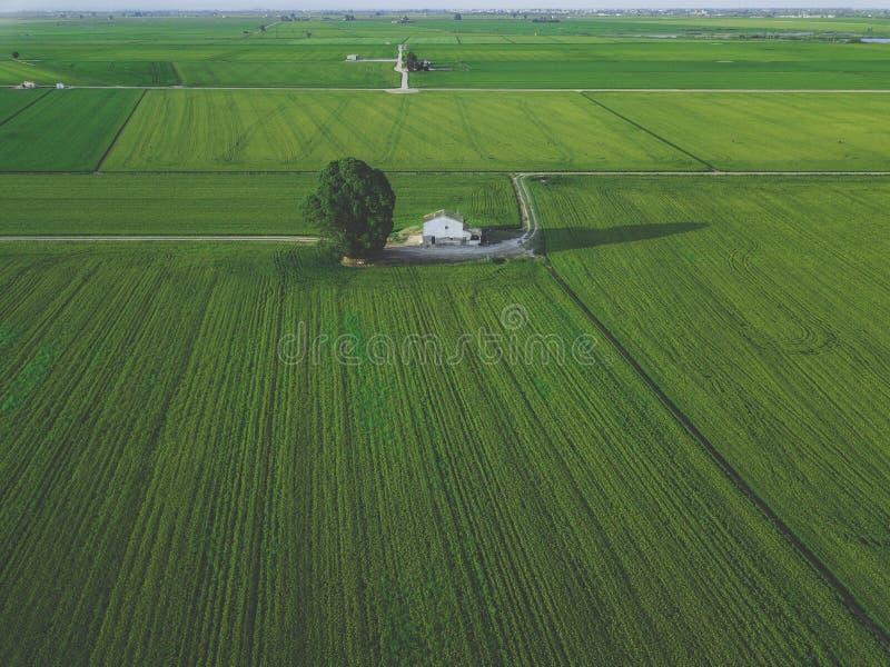 Powietrzny trutnia widok zielony domu na wsi pole z rzędem wykłada, odgórny widok obrazy stock