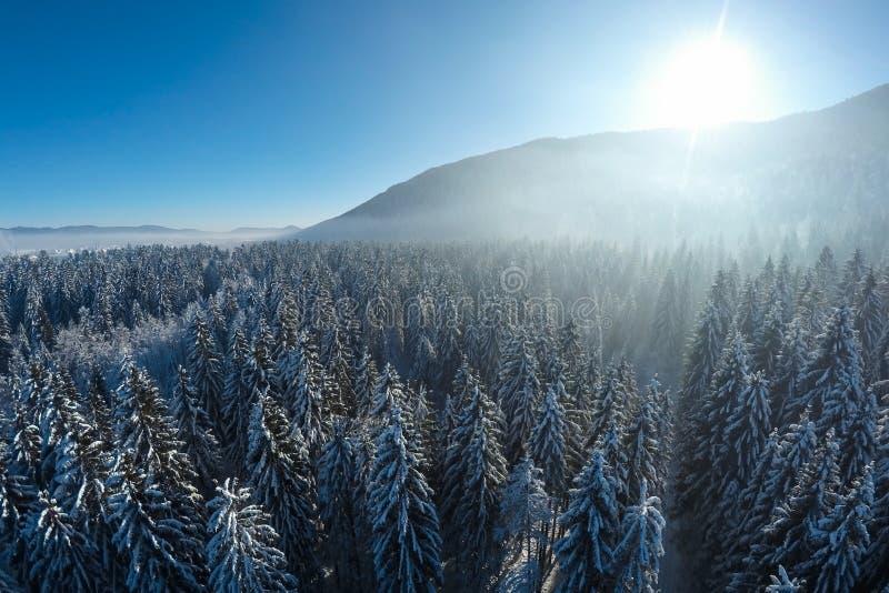 Powietrzny zima krajobraz śnieg zakrywał świerkowych drzewa obraz stock