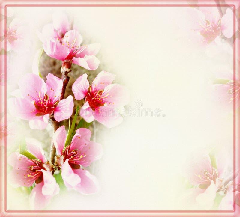 Powitanie kwiecista karta z brzoskwini ramą i kwiatami ilustracja wektor