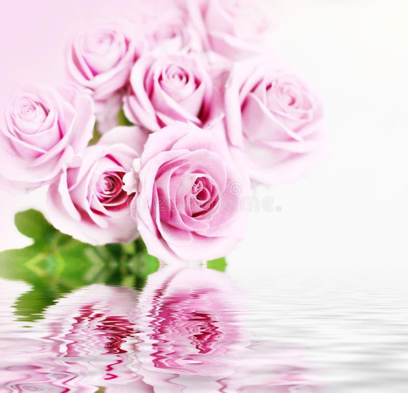 powodzi róże zdjęcie royalty free
