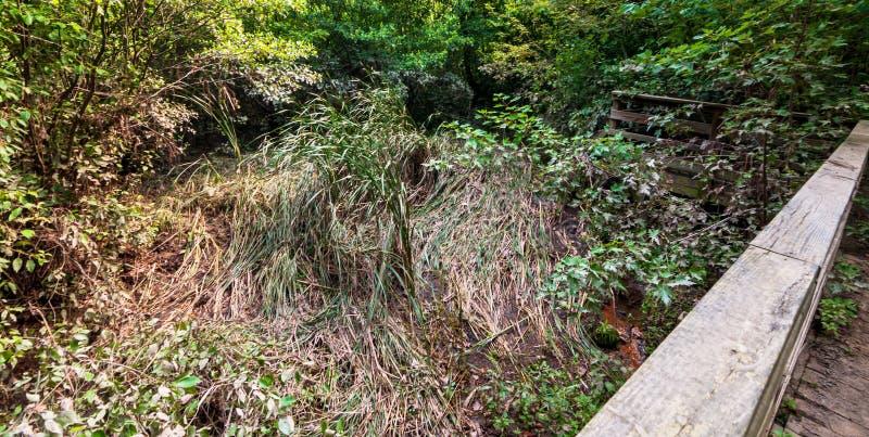 Powodzi szkoda od Dziewięć mil Biega opłatę ulewni deszcze w Frick parku, Pittsburgh, Pennsylwania, usa zdjęcia royalty free