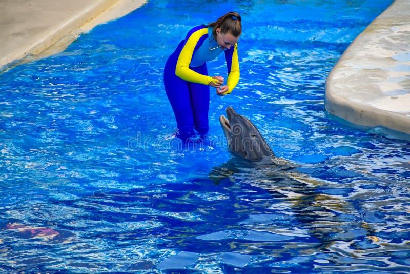 Powozowy stażowy delfin z specjalnym gwizd na błękitne wody przy Seaworld fotografia royalty free