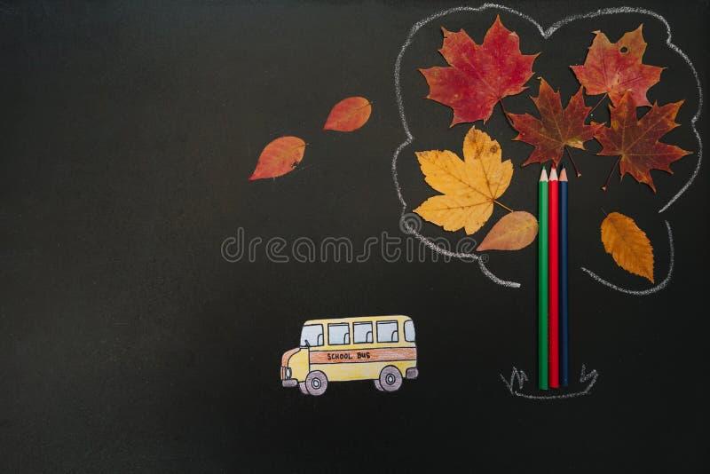 Powrót do koncepcji szkoły Materiały szkolne i biurowe na tle tablicy Płaska warstwa z odstępem obraz royalty free