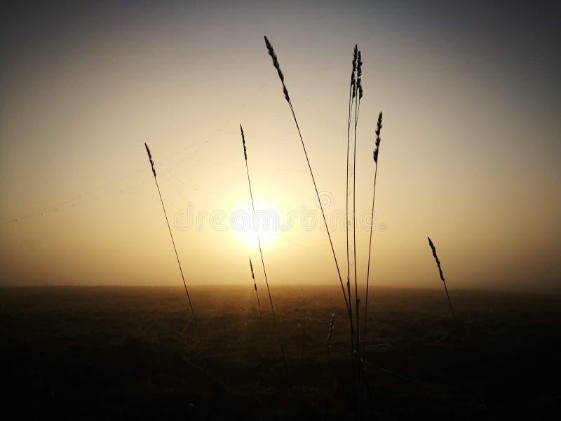 Powstający słońce w zimnym zima ranku spod mgły fotografia stock