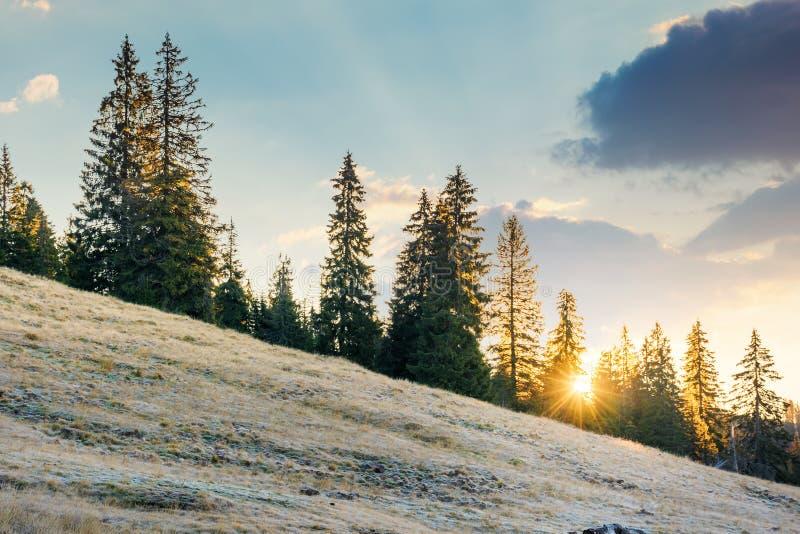 Powstający słońce za świerkowymi drzewami na wzgórzu obraz royalty free