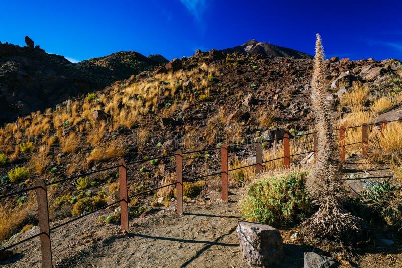 Powulkaniczny lawa krajobraz na Teide obraz stock