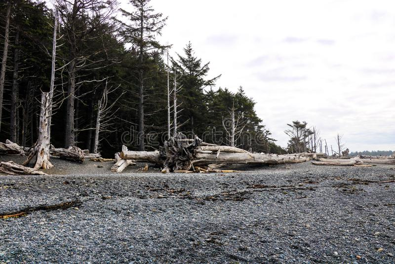 Powyginany driftwood i asortowani oceanów gruzy akumulujący na czarnych piaskach Przegrany Brzegowy backpacking ślad zdjęcia stock