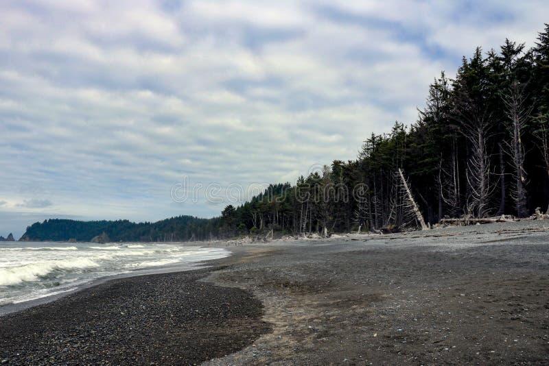 Powyginany driftwood i asortowani oceanów gruzy akumulujący na czarnych piaskach Przegrany Brzegowy backpacking ślad obraz stock