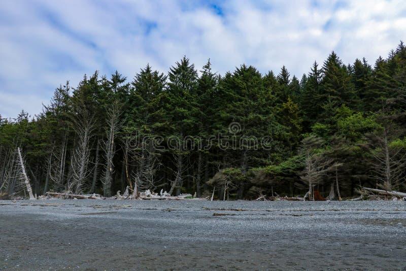 Powyginany driftwood i asortowani oceanów gruzy akumulujący na czarnych piaskach Przegrany Brzegowy backpacking ślad fotografia stock