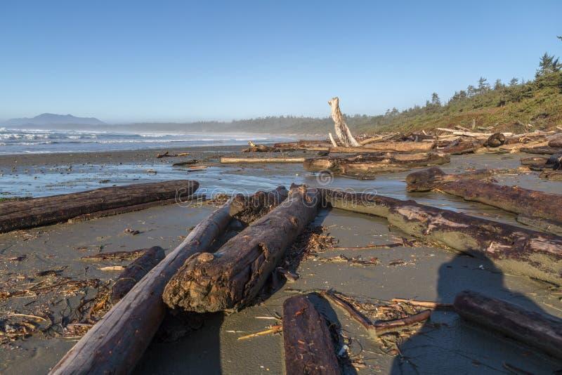 Powyginany dryftowy drewno splatał przypływem, Long Beach, BC zdjęcia royalty free