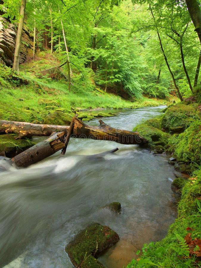Poziom wody pod świeżymi zielonymi drzewami przy halną rzeką Świeży wiosny powietrze w wieczór obrazy royalty free
