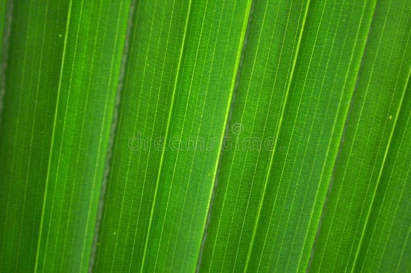 poziomy diagonalny liścia palmy linii zdjęcia stock
