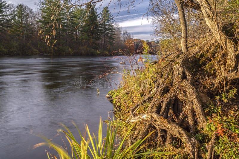 Poziomy widok jesienny na drzewa korzeni i gałęzie podczas zachodu słońca na West Canada Creek, Barneveld, Nowy Jork obrazy royalty free
