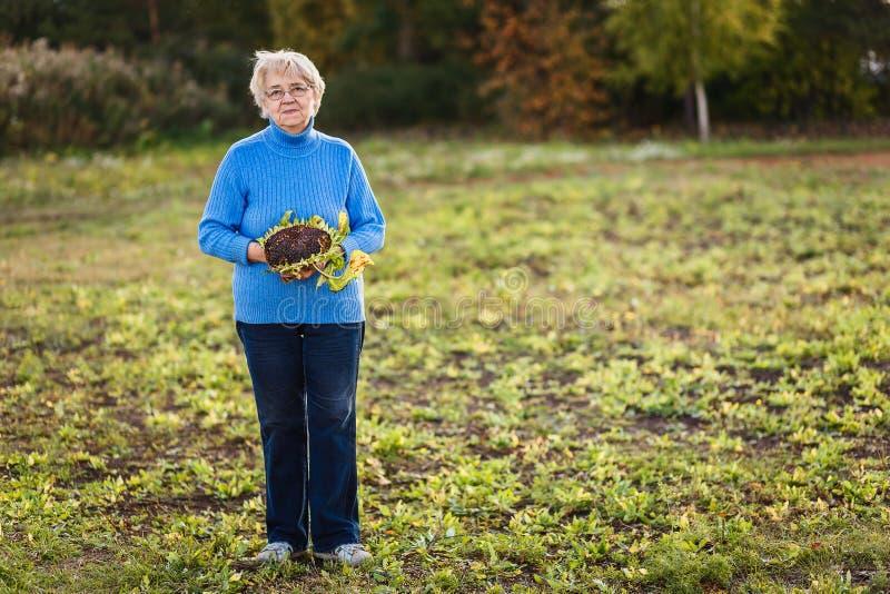 Pozytywny żeński emeryt z słonecznikiem w ręce w pełnym przyroscie zdjęcie royalty free