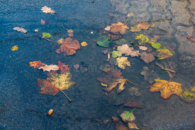 pozza di fango e di acqua sporca fotografie stock