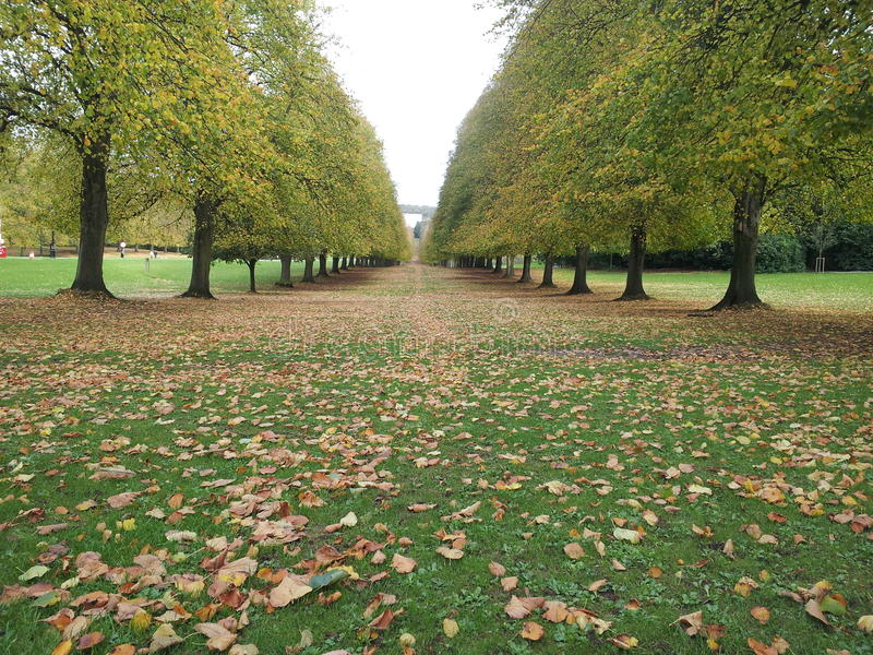 Download Ppark in autumn stock photo. Image of belfast, plant - 34788602
