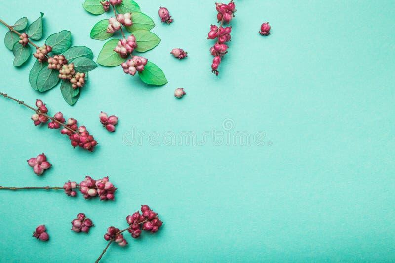 ?ppleh?sten unders?ker torra leafs f?r sammans?ttning som plundrar vasen En uppsättning av höstsidor och lösa dekorativa bär arkivfoton