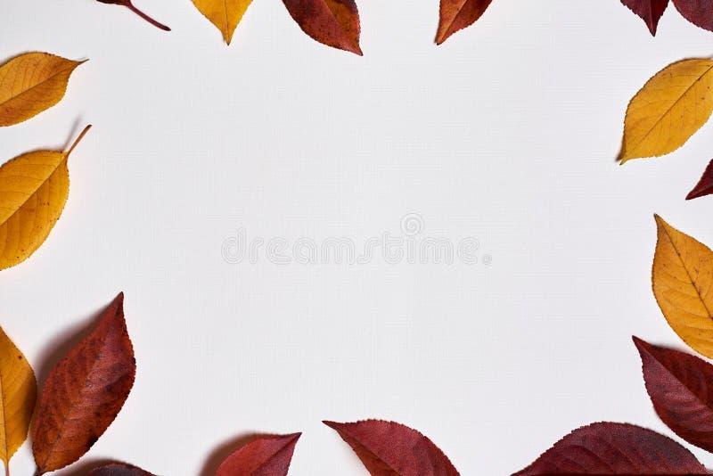 ?ppleh?sten unders?ker torra leafs f?r sammans?ttning som plundrar vasen Ram som göras av gula och röda sidor på vit bakgrund Ned royaltyfri foto