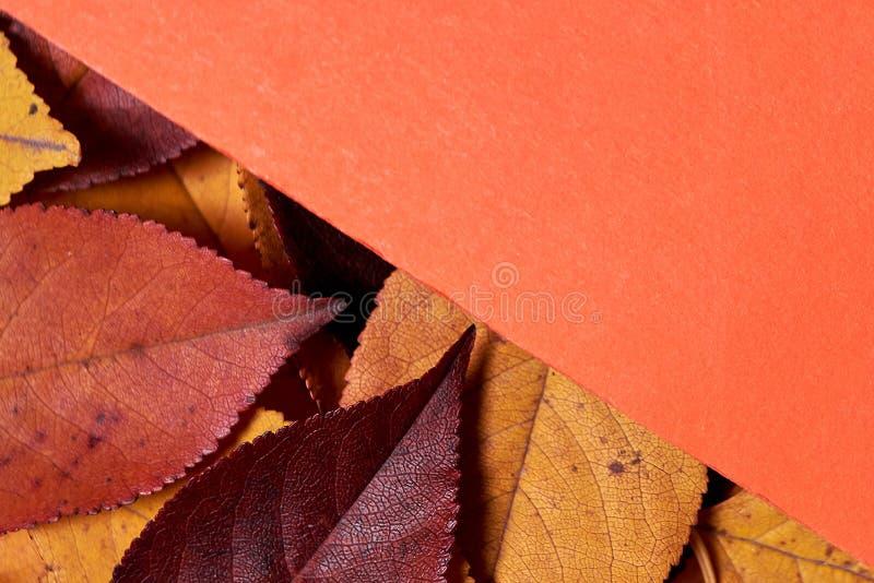 ?ppleh?sten unders?ker torra leafs f?r sammans?ttning som plundrar vasen Ram som göras av sidor och orange pappers- bakgrund Nedg fotografering för bildbyråer