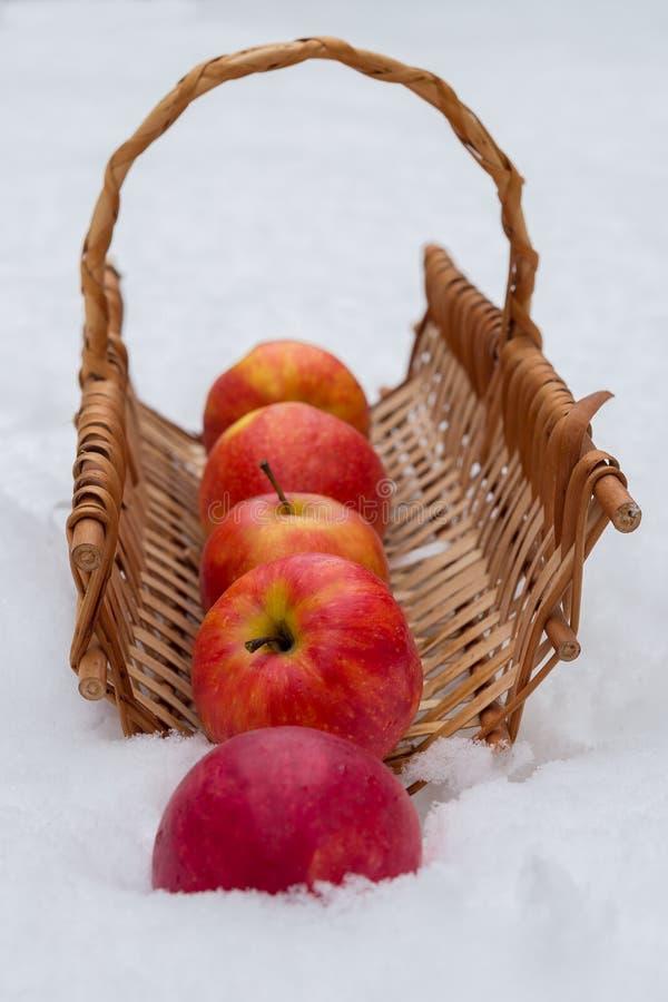 Pples  Ð в снеге стоковые изображения rf