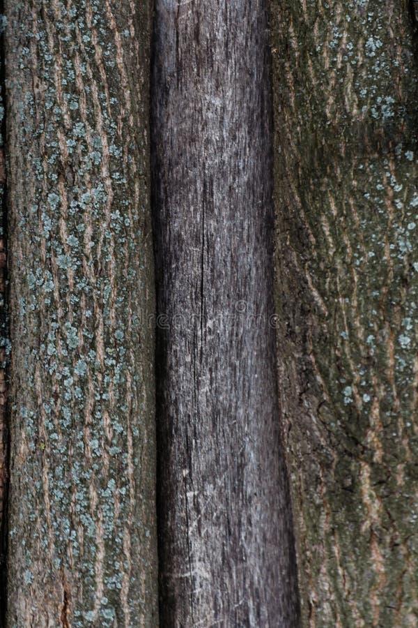 Prägeartige Beschaffenheit der Barke eines Baums Alte hölzerne Baumbeschaffenheits-Mustertapete Ökologie- und Naturkonzepthint stockbild