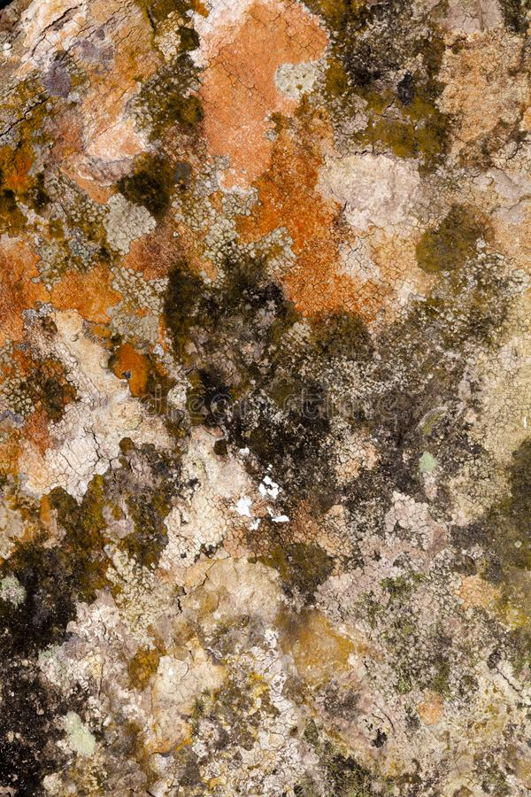 Präglad textur av det bruna skället av ett träd med grön mossa och laven på den arkivbilder