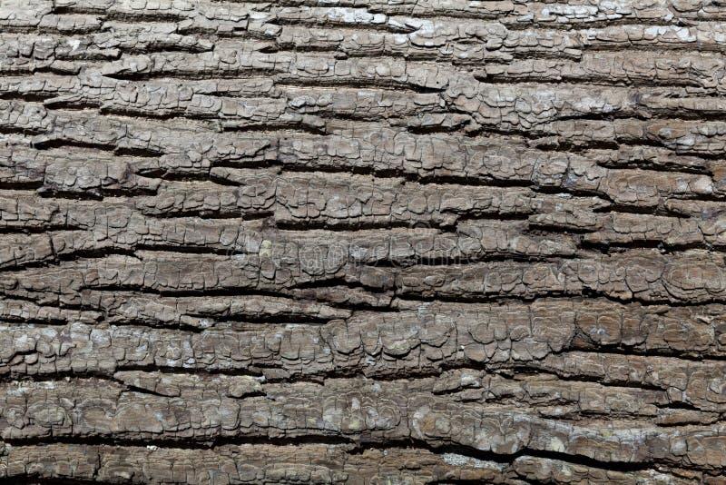 Präglad textur av skället av trädet arkivbild