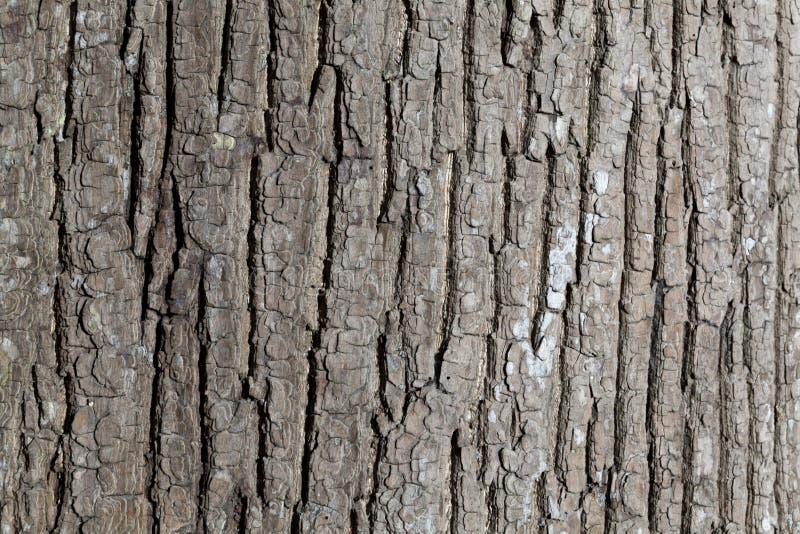 Präglad textur av skället av trädet arkivfoton