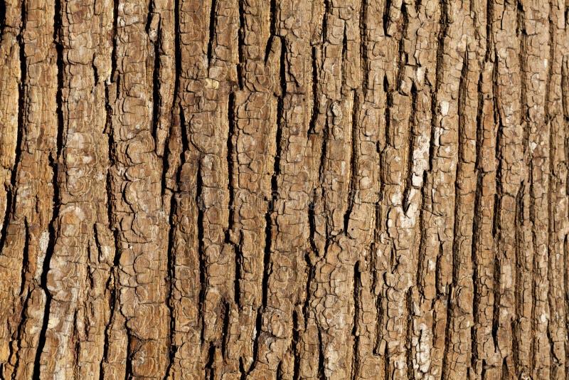 Präglad textur av skället av trädet royaltyfri fotografi
