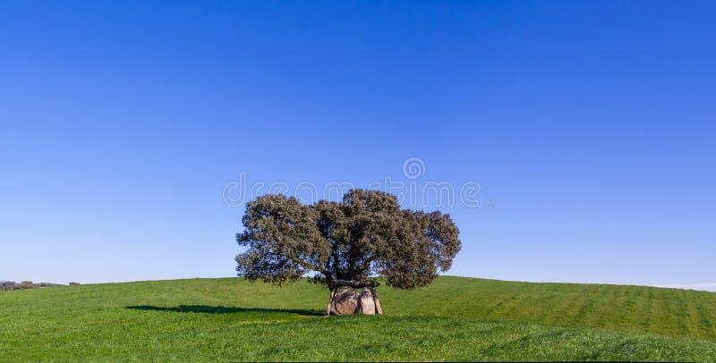 Prähistorischer Dolmen unter Cork Oak stockbild