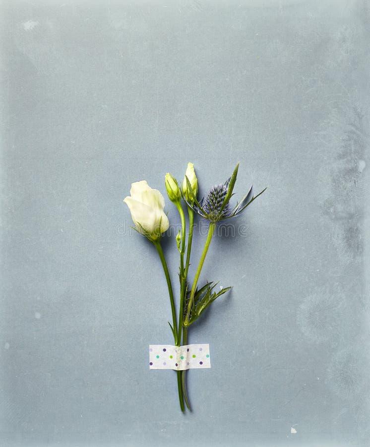 Präriegentiana och hav Holly Flowers på lantlig bakgrund royaltyfri fotografi