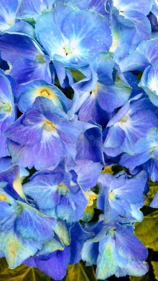Près du bleu images stock