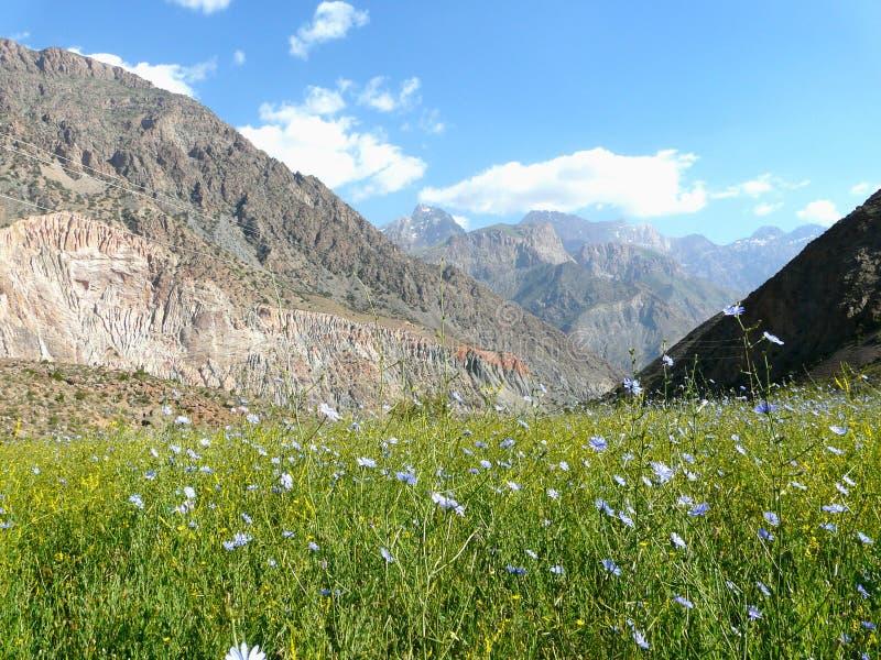 Pré alpin dans les montagnes de fan du Tadjikistan images libres de droits