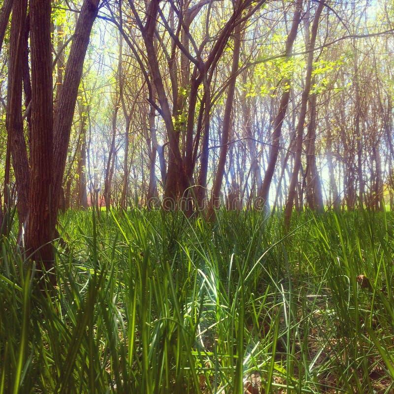 Pré au printemps images stock